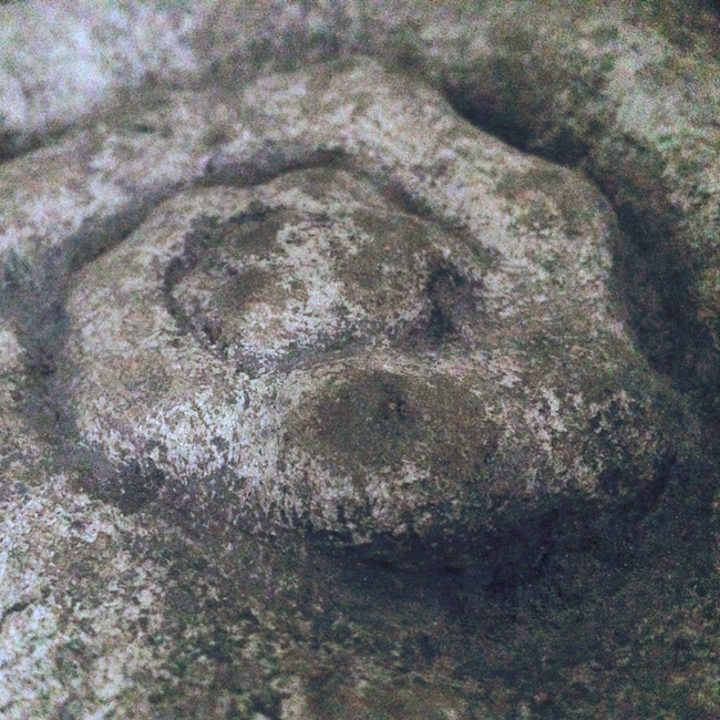 Morpiojolus